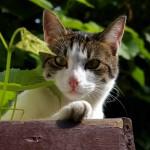 J'm'appelle Lili, j'aime bien les p'tites souris...