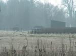 Pferd im Morgendunst auf der rauhreifbedeckten Wiese