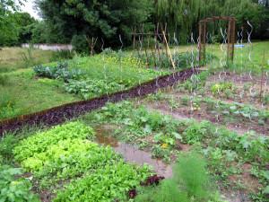 Gemüse unter Wasser