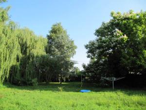 Garten mit blühender Catalpa