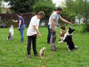 Hunde-Vorführung