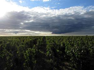 Wein und Himmel