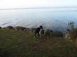 Kleiner Hund am großen See
