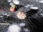 Mäusegesicht