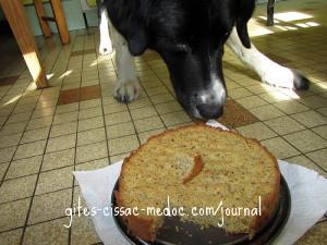 Gaston mit Leberwurstkuchen