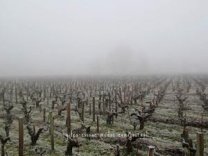 Weinfelder im Nebel