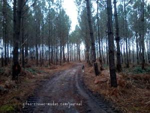 Durch den Pinienwald
