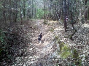 Mountainbike-Weg