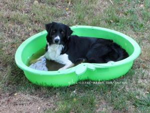 Gaston in seinem Pool