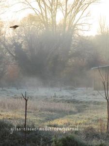 Frostiger Nebel