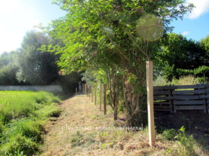 Zaun-Fortschritt an frisch gemähter Grundstücksgrenze